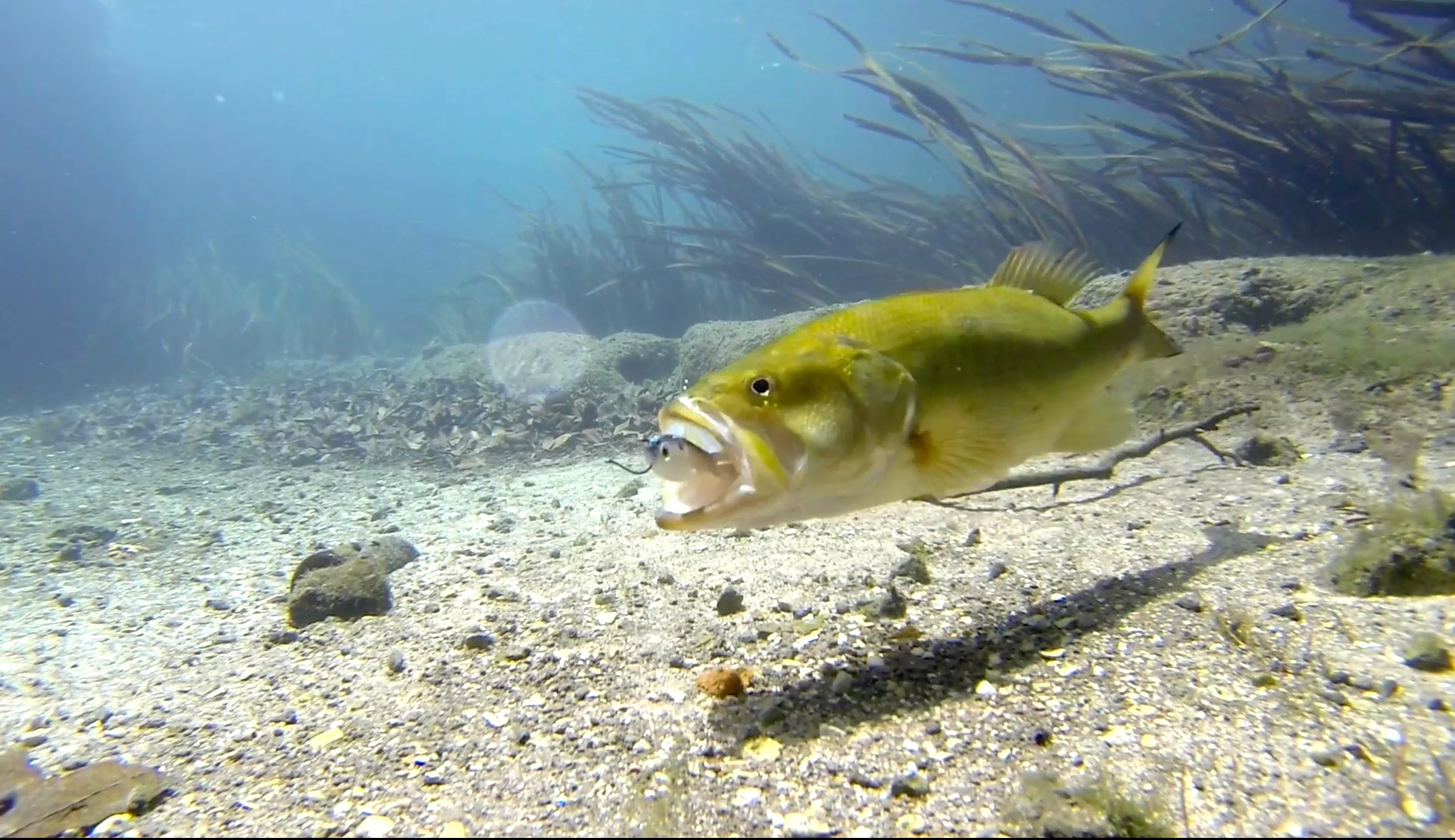 Video underwater footage of bass eating up a lure dink for Fishing lure with camera